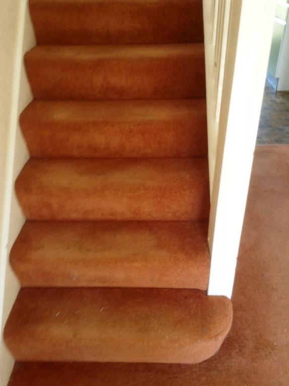 Carpet-10118
