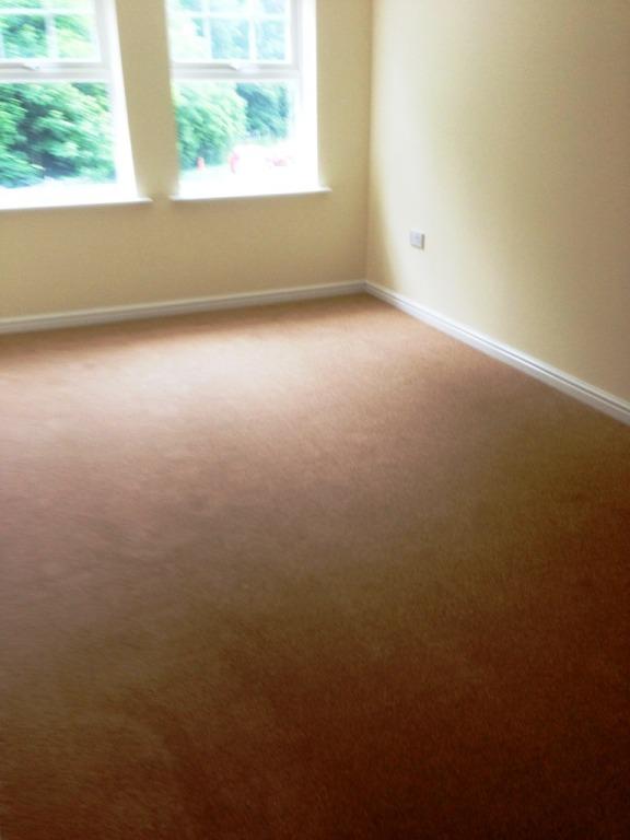 Carpet-1013