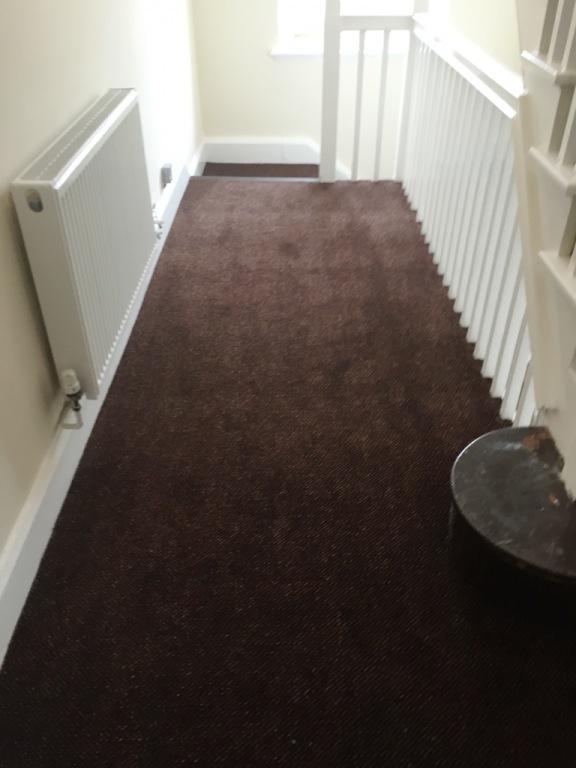 Carpet-10166