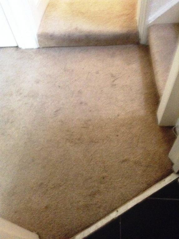 Carpet-1017