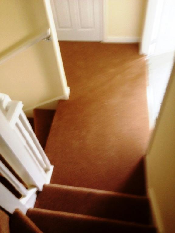 carpet16