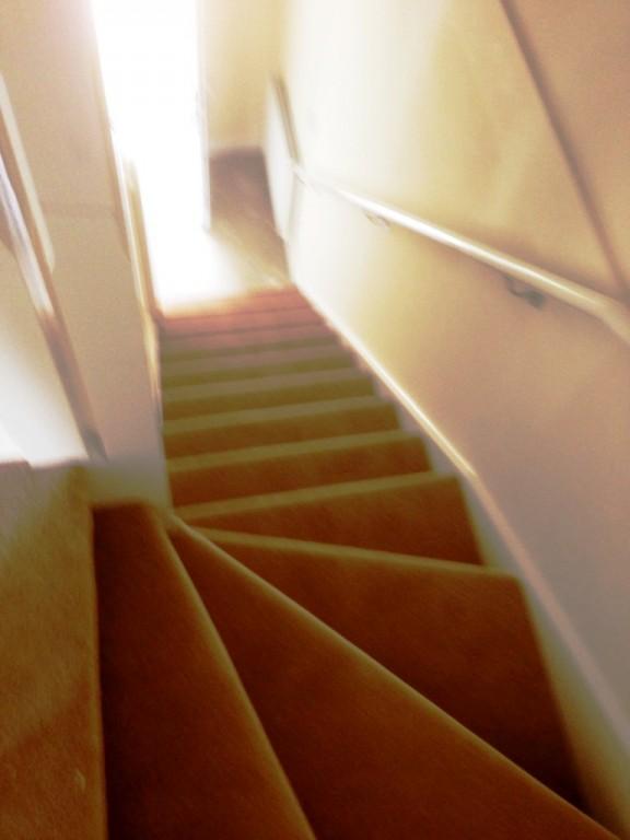 carpet17