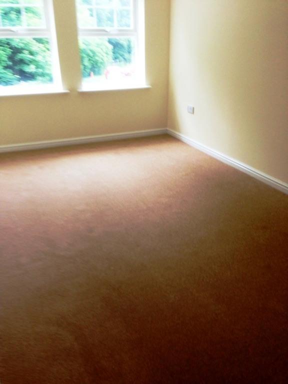 carpet19