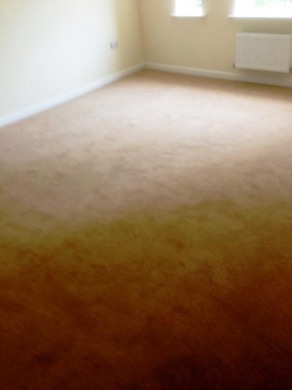 carpet28